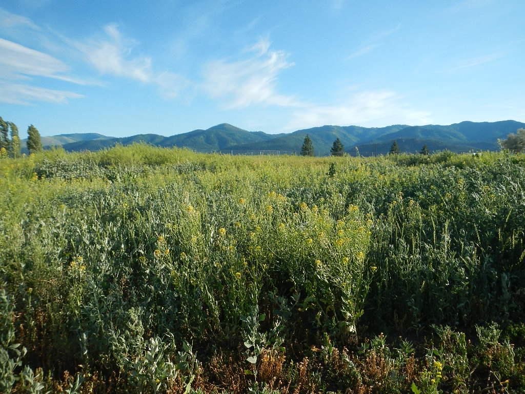 montana pasture with mountain views
