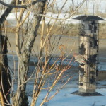 Winter Bird Watching on the Homestead
