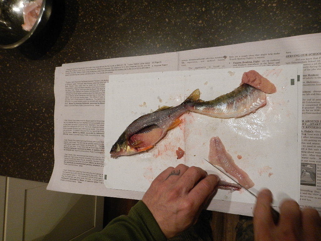 montana ice fishing filleting a fresh caught perch