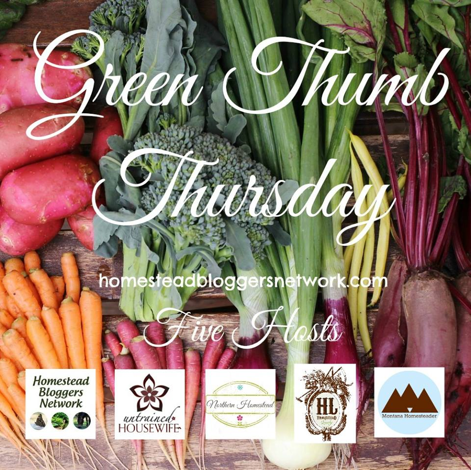 Green Thumb Thursday weekly gardening blog hop link up