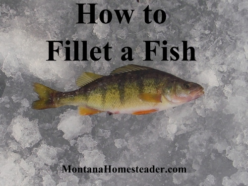 How to Fillet a Fish from Montana Homesteader