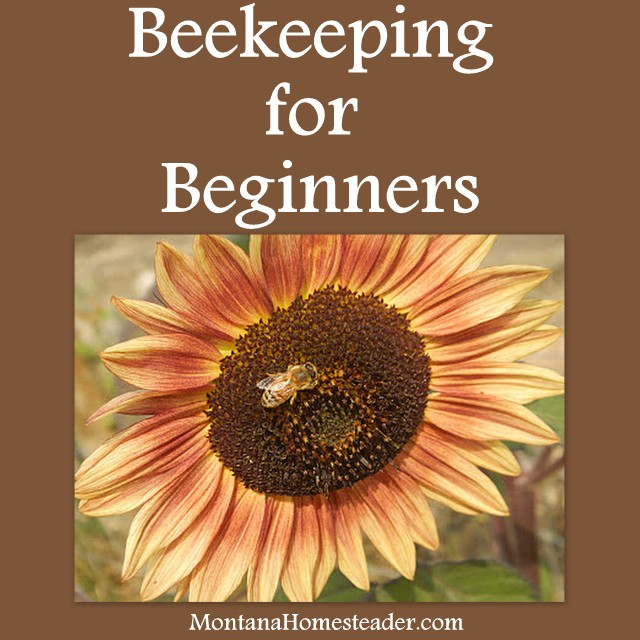 Beekeeping for Beginners from Montana Homesteader