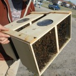 Bee Day at Fort Missoula 2014