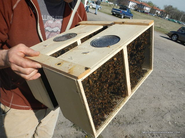 how honeybees are transported when you buy them