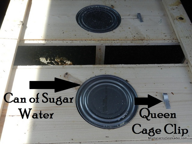How honey bees packages are transported with can of sugar water and queen cage