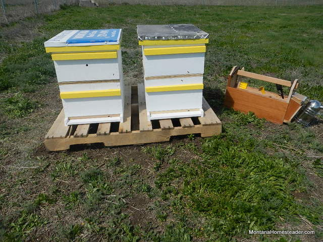 gentle approach to hiving honey bees into Langstroth bee boxes