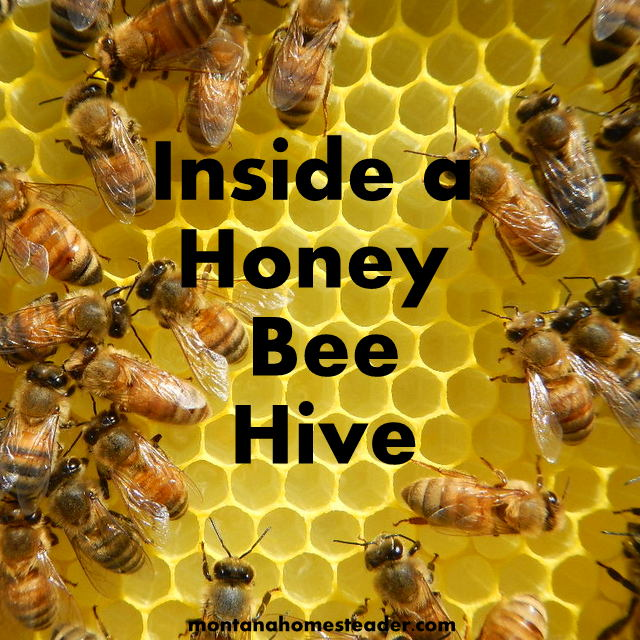 a look inside a honey bee hive