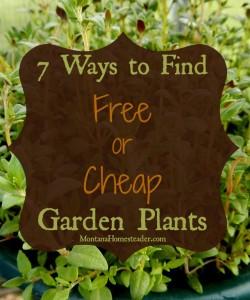 7 ways to find free or cheap garden plants |Montana Homesteader