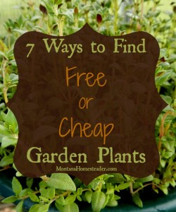 7 ways to find free or cheap garden plants |Montana Homesteader