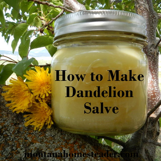 How to make homemade dandelion salve