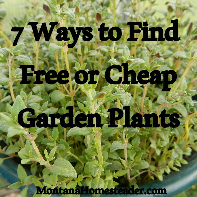 7 ways to find free or cheap garden plants montana for Cheap garden plants