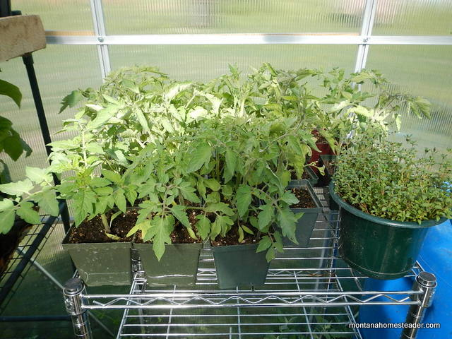 Tips to start growing seedlings in a greenhouse