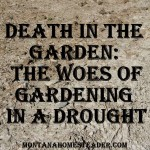 Death in the Garden: The Woes of Gardening in a Drought