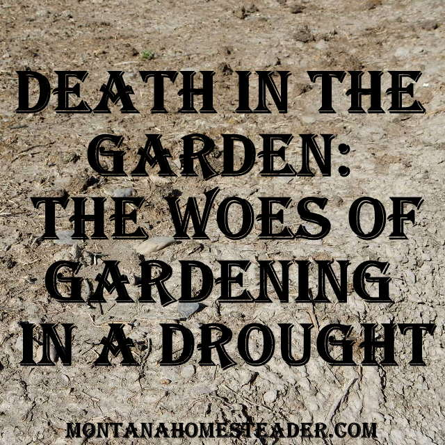 Death in the Garden and the Woes of Gardening in a Drought