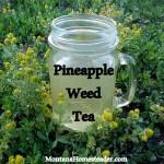 Pineapple Weed Tea