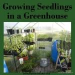 Growing Seedlings in a Greenhouse
