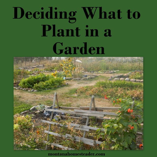 Deciding What to Plant in a Vegetable Garden