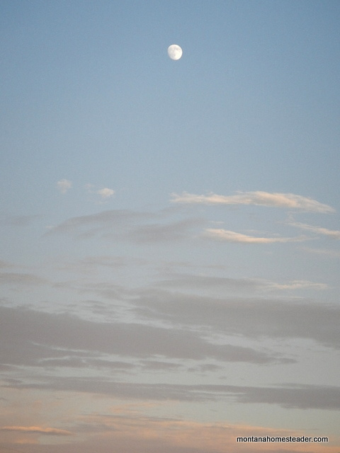 summer moon in the evening sky in montana
