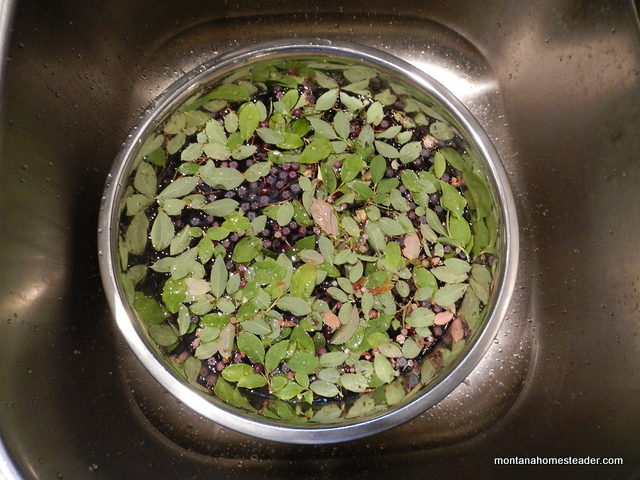 How to wash and clean debris from wild foraged huckleberries in rocky mountains Montana Homesteader