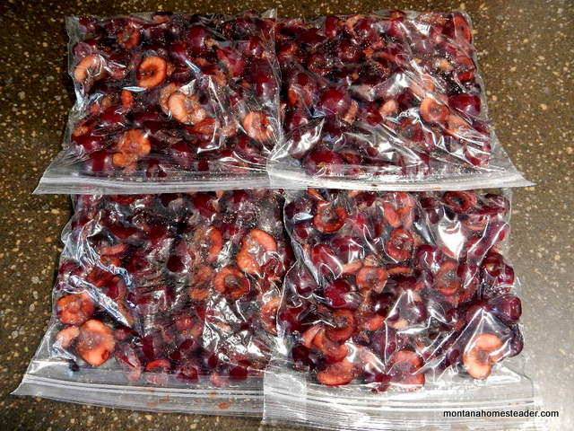 How to pit and preserve sweet Flathead Lake cherries Montana Homesteader