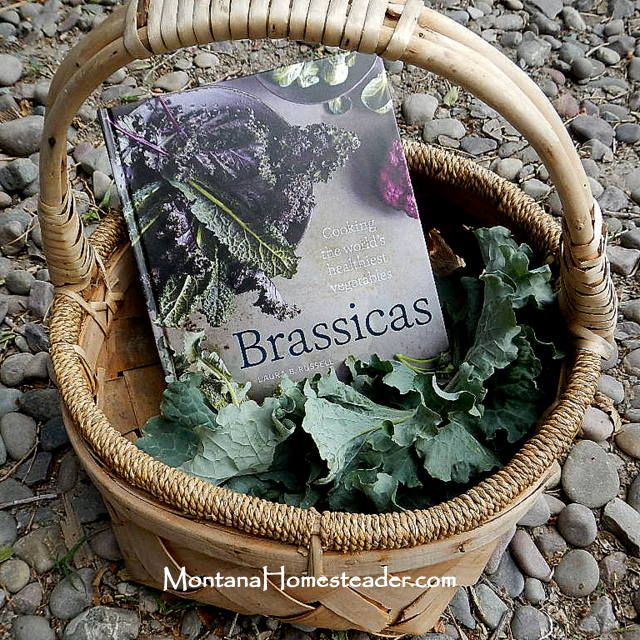 Cooking with Brassicas the world's healthiest vegetables  Montana Homesteader