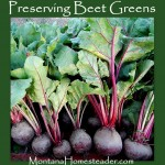 Preserving Beet Greens