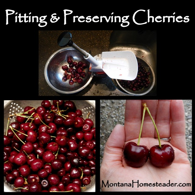 Pitting and Preserving Cherries Montana Homesteader