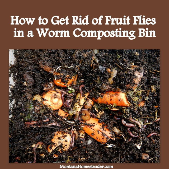 how to get rid of fruit flies in a worm compost bin