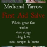Medicinal Yarrow First Aid Salve