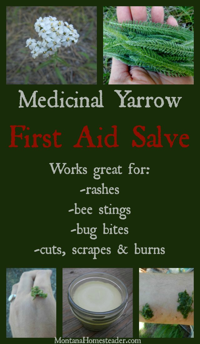 Medicinal Yarrow First Aid Salve Montana Homesteader