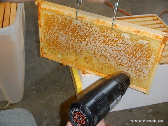 Using a heat gun to melt beeswax caps on honeycomb frames to harvest honey from bee hives Montana Homesteader