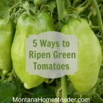 How to ripen green tomatoes 5 different ways