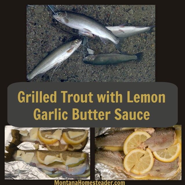 Grilled Trout with Lemon Garlic Butter Sauce Recipe. Simple, easy, delicious! | Montana Homesteader
