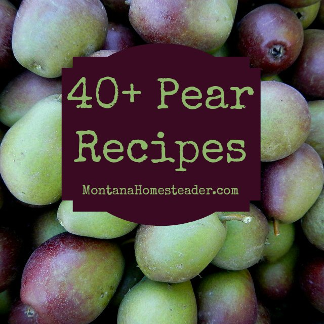 40+ Pear recipes for salads, desserts, main dishes, canning and preserving and more! | Montana Homesteader