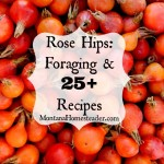 Rose Hips Foraging and 25+ Recipes