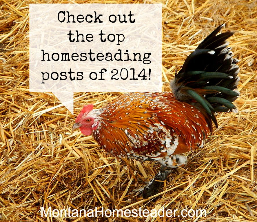 Top homesteading posts of 2014  Montana Homesteader