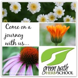 Green Path Herb School Missoula Montana Learn Herbalism | Montana Homesteader