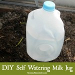 DIY Self Watering Milk Jug
