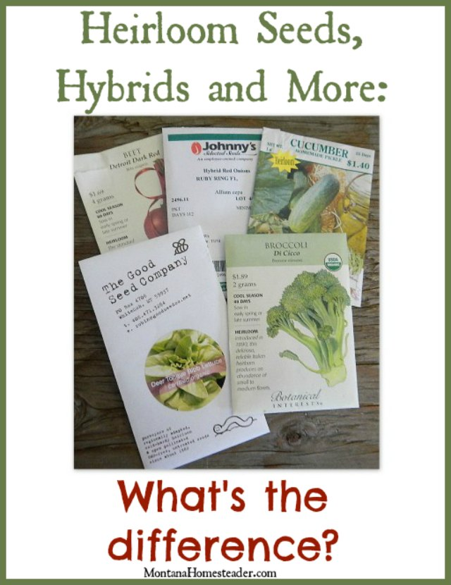 Heirloom seeds, hybrid seeds and more | What's the difference? | Montana Homesteader