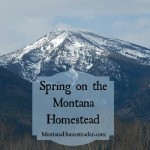 Spring on the Montana Homestead