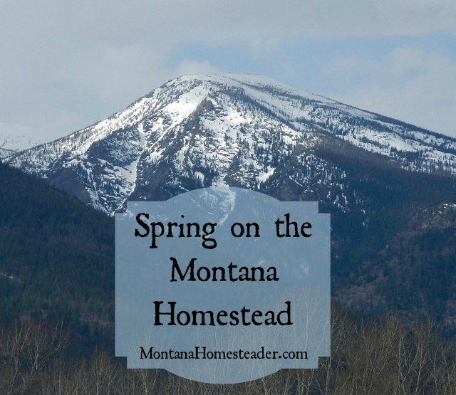 Spring on the Montana Homestead | Montana Homesteader