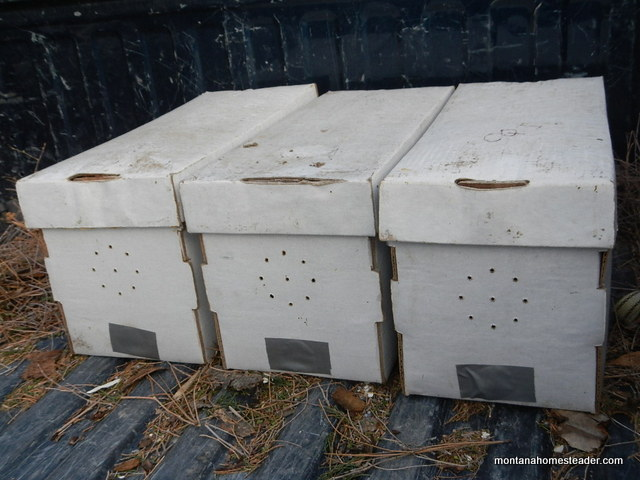 transporting nucs of honeybees | Montana Homesteader
