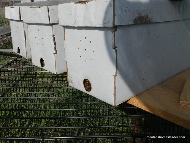 A nuc of honey bees compared to buying a package of honey bees | Montana Homesteader