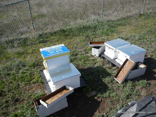 The pros and cons of nucs vs package bees | Montana Homesteader