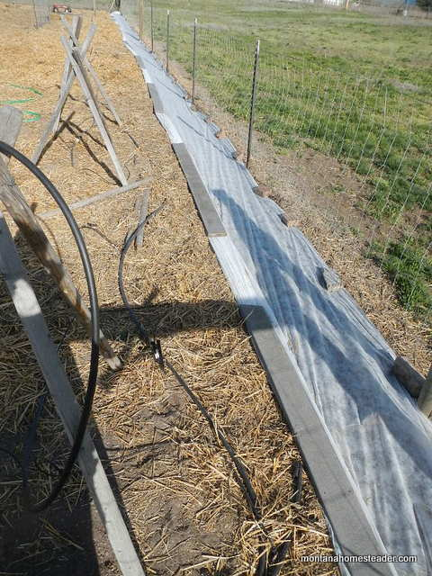 6 ways you can use row cover in a garden to help you grow more food year round!   Montana Homesteader