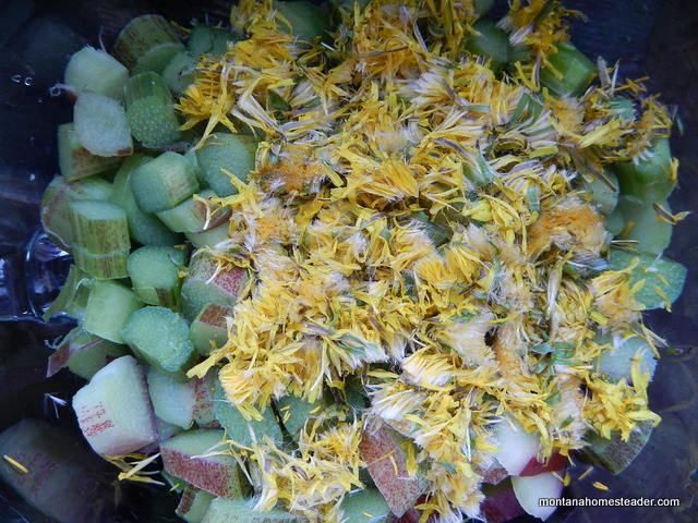Chopped rhubarb and dandelion flowers for rhubarb dandelion pie- who knew dandelions could be so delicious! | Montana Homesteader