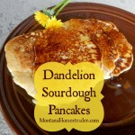 Dandelion Sourdough Pancakes