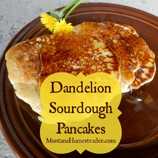 Dandelion sourdough pancakes- I bet you didn't know dandelions could be so tasty! | Montana Homesteader