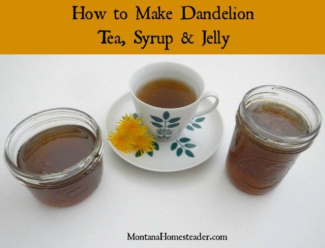 How to make homemade dandelion tea, syrup and jelly | Montana Homesteader
