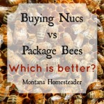 Buying Nuc vs Package Bees